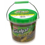 "Berkley® Gulp!® Alive!™ 4"" Shrimp Bait Bucket"