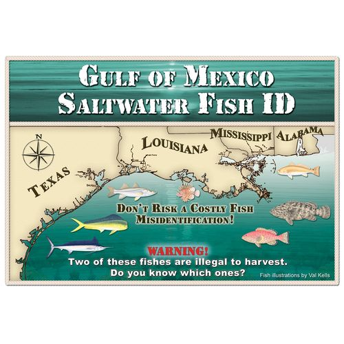 Gulf of Mexico Saltwater Fish ID