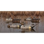 Avian-X Topflight Pintail Duck Decoys 6-Pack