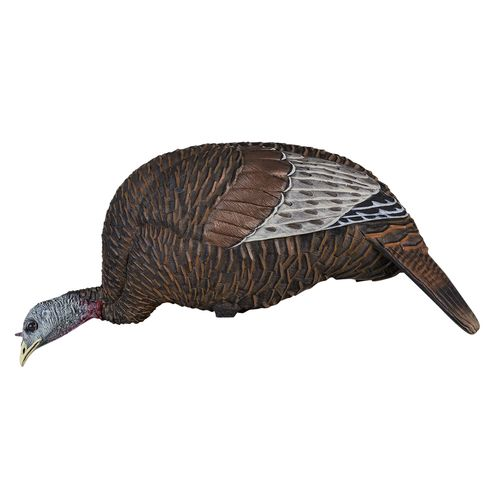 Display product reviews for Flextone Thunder Chick 3-D Feeder Turkey Decoy