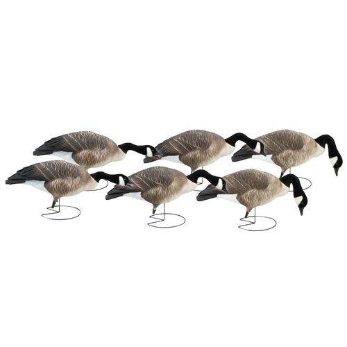 Greenhead Gear® Commercial-Grade 3-D Full-Body Honkers Canada Goose Decoys 6-Pack