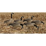 Avian-X AXP Painted Honkers Fusion Goose Decoys 6-Pack