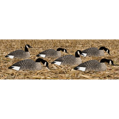 Display product reviews for Avian-X Painted Honker Shell Geese Decoys 6-Pack