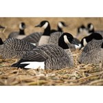 Avian-X Painted Honker Shell Geese Decoys 6-Pack - view number 2