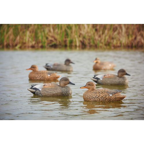 Game Winner Carver's Series Gadwall Duck Decoys 6-Pack - view number 2