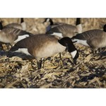 Greenhead Gear® Commercial-Grade 3-D Full-Body Honkers Canada Goose Decoys 6-Pack - view number 6