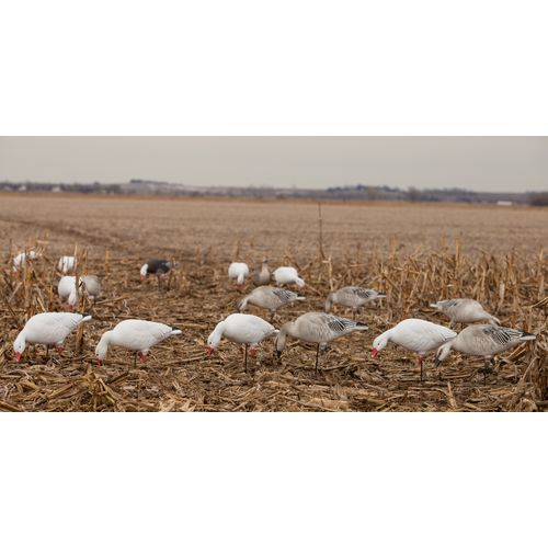 Greenhead Gear® Pro-Grade 3-D Full-Body Snows and Blues Feeder Decoys 6-Pack - view number 7