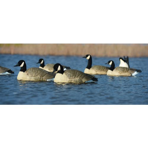 Greenhead Gear® Pro-Grade 3-D Honker Floater Goose Decoys 4-Pack - view number 6